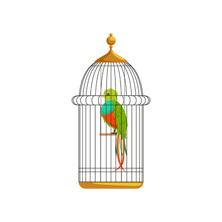Long-tailed tropical bird with colorful feathers in metallic cell. Cartoon domestic animal. Flat vector design for pet store, business poster, flyer or website