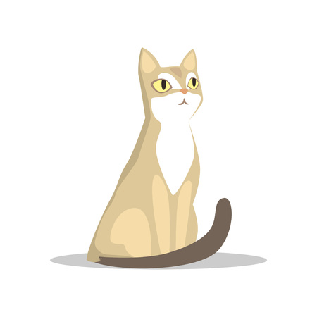 Short-haired beige cat vector illustration