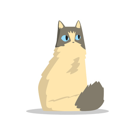 Funny beige puffy cat with gray markings on head and tail. Domestic animal with big blue eyes. Cartoon pet character. Design for sticker or greeting card. Flat vector illustration isolated on white.