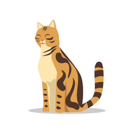 Purebred brown-spotted bengal cat vector illustration