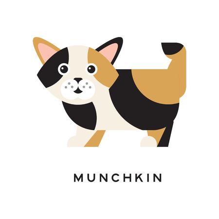マンチカン子猫面白い銃口を持つ。国内の猫の漫画のキャラクター。トリコロールの毛皮と短い足を持つすばらしい創造物。ペット ショップや獣医