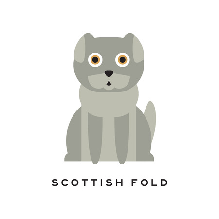 Adorable scottish fold cat. Lop-eared kitten with gray short fur and big brown eyes. Cartoon character of purebred domestic animal. Human s little friend. Flat vector illustration isolated on white.
