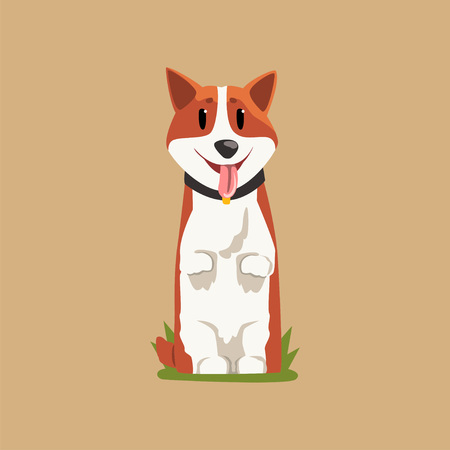 Joyful red-haired corgi standing on hind legs. Puppy with tongue hanging out. Cartoon domestic animal character with black collar. Human s best friend. Flat vector design