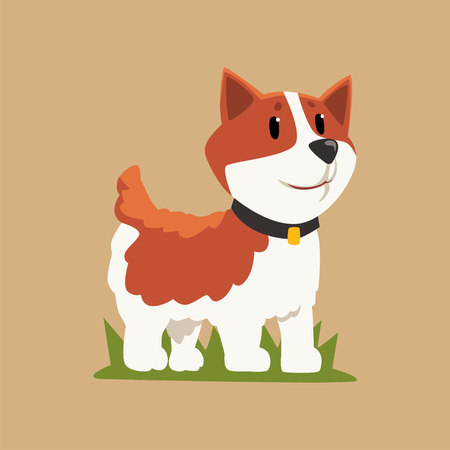 Smiling welsh corgi standing on green grass. Dog character with black collar. Humans best friend. Domestic animal. Flat vector for sticker, print or children book