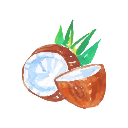 Two halves of coconut with green palm tree leaves. Healthy tropical fruit. Natural product design. Organic food store label. Watercolor painting. Vector illustration