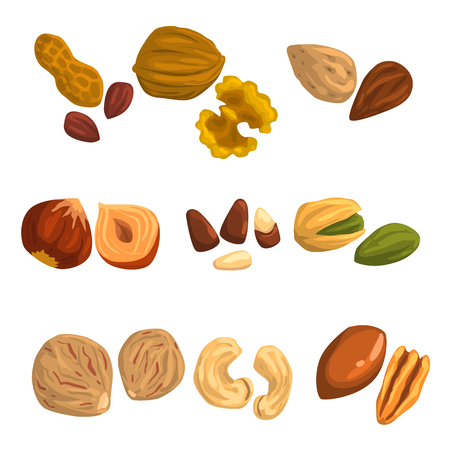 Flat vector icons of nuts and seeds. Hazelnut, pistachio, cashew, nutmeg, walnut, Brazil nut, pecan, peanut and almond.