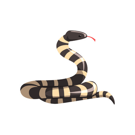 California king snake with black and white bands. Cartoon large reptile with tongue out. Colorful wild serpent. Non-venomous creature Flat vector design