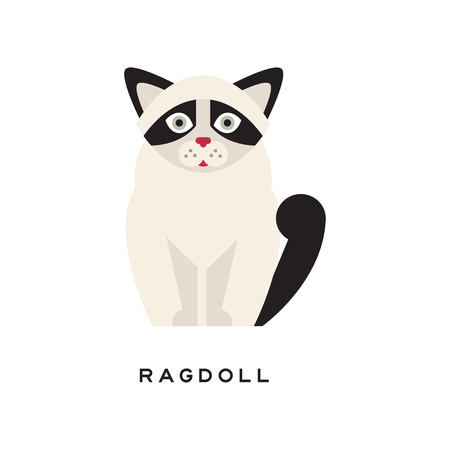 Cute portrait of ragdoll cat isolated on white. Cartoon character of purebred pet. Large and muscular long-haired animal with black markings on ears, tail and around eyes. Flat vector illustration. Illustration
