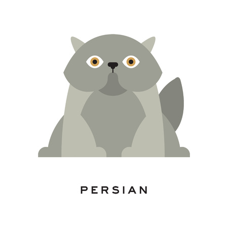Fluffy gray persian cat. Adorable long-haired feline with round face and short muzzle. Cartoon pet character. Domestic animal in flat style. Isolated vector illustration. Design for print.