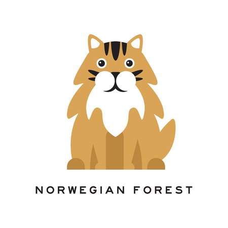 Norwegian forest cat. Fluffy domestic animal with long red hair, black markings on head, white chest and big shiny eyes. Cartoon purebred pet character. Isolated vector illustration in flat style.