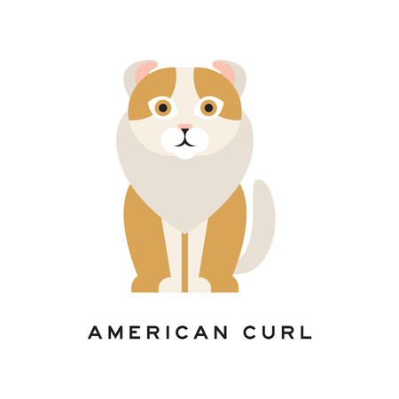 American curl cat. Purebred pet with curled ears, brown fur and white ruff around neck. Cartoon domestic animal. Flat vector design for vet clinic or zoo shop