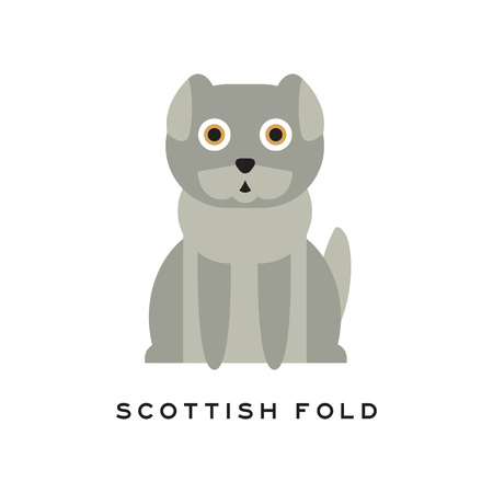 Adorable scottish fold cat. Lop-eared kitten with gray short fur and big brown eyes. Cartoon purebred domestic animal. Human s little friend. Flat vector design