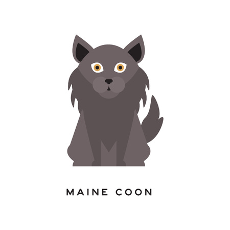 Portrait of maine coon cat. Adorable feline with gray long coat, ruff around neck and big brown eyes. Domestic animal. Cartoon purebred pet character. Isolated vector illustration in flat style.