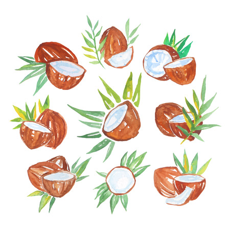 Coconuts with palm leaves set of watercolor vector Illustrations Иллюстрация