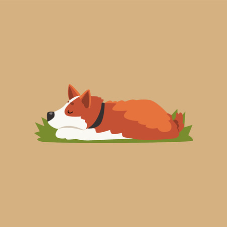 Colorful illustration with cute sleeping corgi. Cartoon red-haired dog character relaxing on green lawn. Purebred domestic animal. Isolated flat vector design for print, postcard or network sticker.