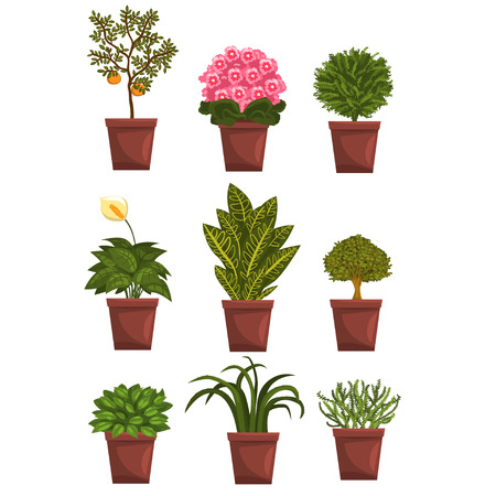 Set of pot deciduous, flowering, fruit plants with flowers and leaves. Anthurium, mandarin, violet, bonsai, pipal. Home natural design elements. Gardening hobby. Vector illustration isolated on white.