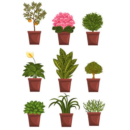 Zestaw doniczkowy liściastych, kwitnących, owocowych z kwiatami i liśćmi. Anturium, mandarynka, fiołek, bonsai, pipal. Naturalne elementy wystroju domu. Hobby ogrodnicze. Ilustracja wektorowa na białym tle.