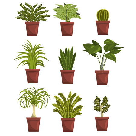 Set of pot green deciduous plants with leaves. Sansevieria, cactus, pipal, bonsai, palm tree. Houseplants design. Gardening hobby. Vector isolated on white