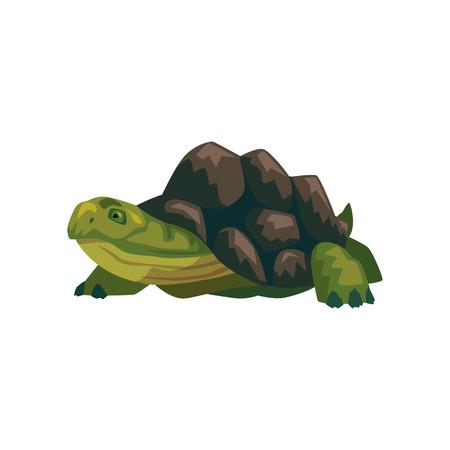 Sea turtle, water reptile cartoon vector Illustration