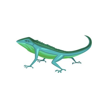 Salamander, amphibian animal cartoon vector Illustration
