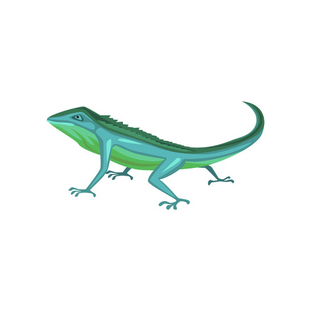 Salamander, amphibian animal cartoon vector Illustration