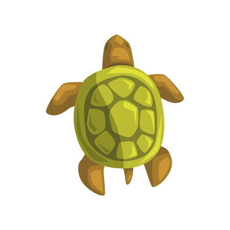 Sea turtle, reptile, view from above cartoon vector Illustration