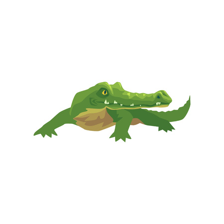 Crocodile, amphibian animal cartoon vector Illustration