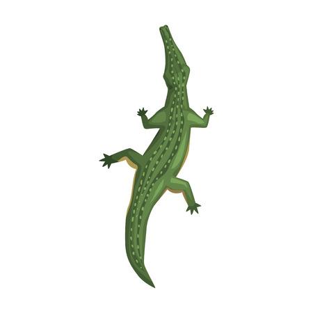 Krokodyl, zwierzę płazów, widok z góry ilustracja kreskówka wektor