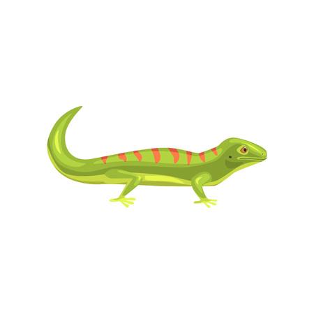 도마뱀, 수 륙 양용 동물 만화 벡터 일러스트