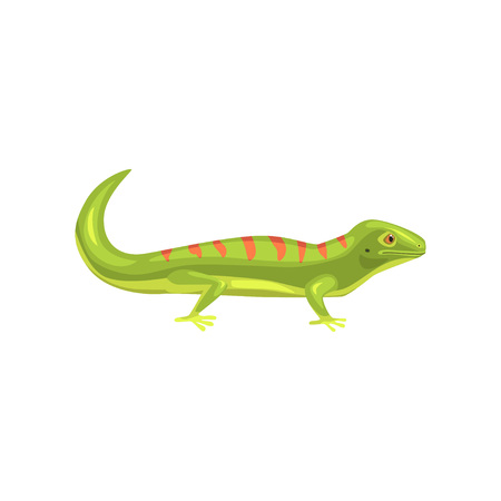 Lizard, amphibian animal cartoon vector Illustration