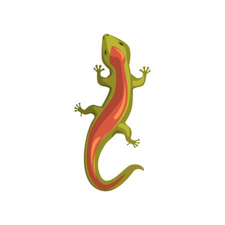 Lizard, amphibian animal, view from above cartoon vector Illustration