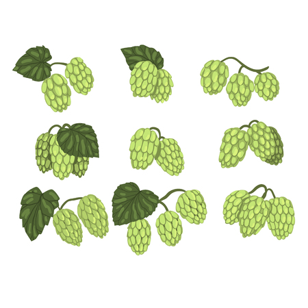 Hand drawn set of green hop cones branches with leaves. Brewing industry. Natural element. Ilustração