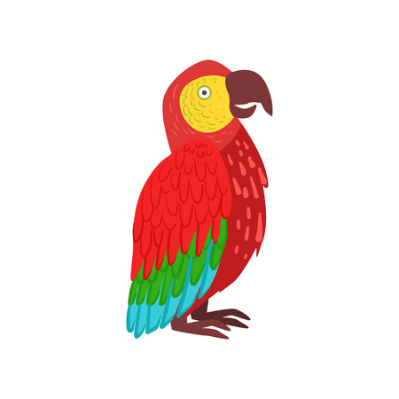 Red macaw parrot vector Illustration on a white background. Illustration
