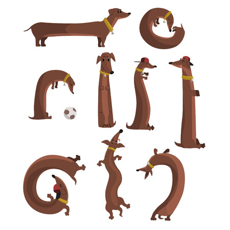 Dachshund dog set, cute funny long dog in different situations vector Illustrations isolated on a white background