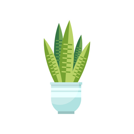 Sansevieria house plant, indoor flower in pot, elegant home decor vector Illustration