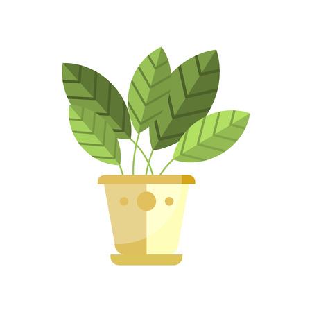 Spathiphyllum house plant, indoor flower in pot, elegant home decor vector Illustration