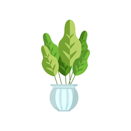 Herbaceous house plant, indoor flower in pot, elegant home decor vector Illustration Imagens - 95160013