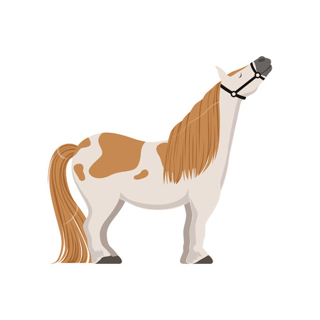 Cute spotted pony, thoroughbred horse vector Illustration