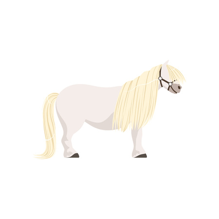 White pony, thoroughbred horse vector Illustration