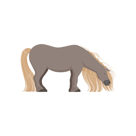 Cute grey pony, thoroughbred horse vector Illustration