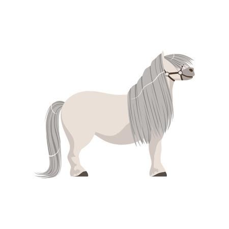 Cavallino bianco con criniera grigia, cavallo di razza illustrazione vettoriale isolato su uno sfondo bianco Vettoriali