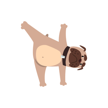 French bulldog in yoga pose, funny dog practicing yoga cartoon vector Illustration on a white background