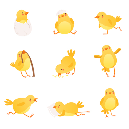 Set of funny yellow chicken in various situations. Cartoon character of little farm bird. Isolated flat vector design for postcard, sticker or children s book Imagens - 95856503