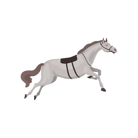 Grey thoroughbred horse, equestrian professional sport vector Illustration