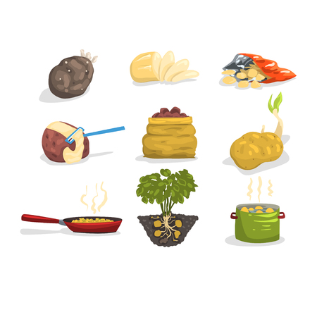 Dishes of potatoes set, raw and cooked potatoes vector Illustrations