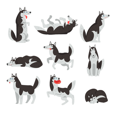 Set of Siberian husky dog in different actions Vectores