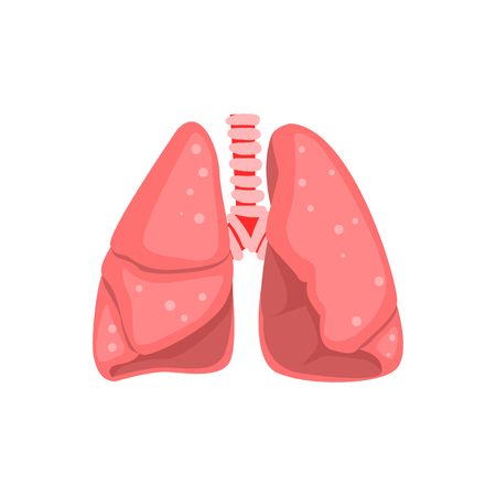 Human lungs, internal organ anatomy vector Illustration on a white background Çizim