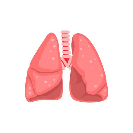 Menselijke longen, interne orgel anatomie vector illustratie op een witte achtergrond