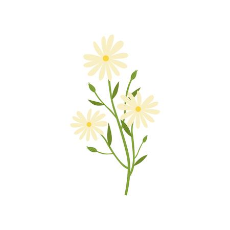 Planta de manzanilla, remedio natural para el tratamiento del frío ilustración vectorial aislado en un fondo blanco. Ilustración de vector