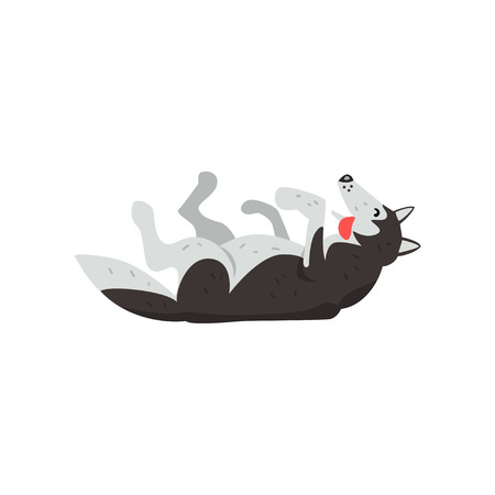Siberian husky dog character lying on the back vector Illustrations isolated on a white background. Çizim